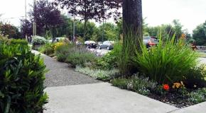feature-boulevard-gardening